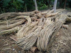 processing the rattan cane